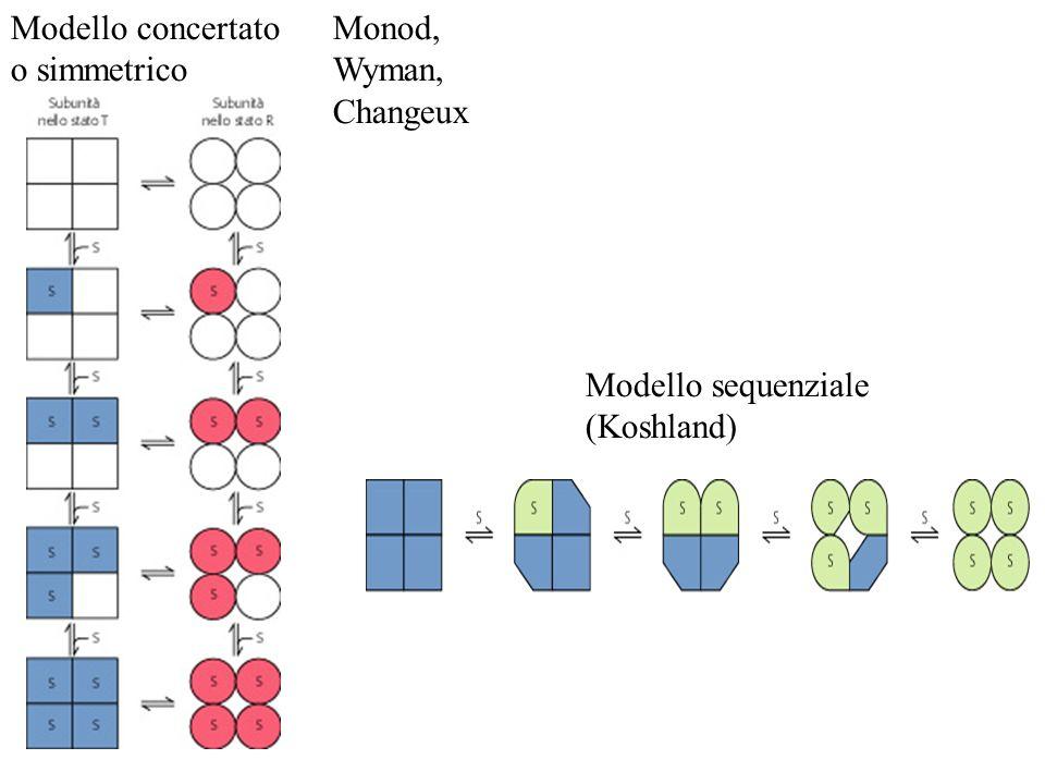 Modello concertato o simmetrico