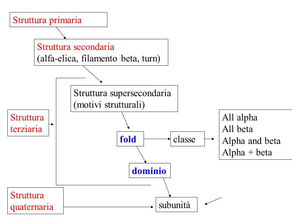 Struttura primaria Struttura secondaria. (alfa-elica, filamento beta, turn) Struttura supersecondaria (motivi strutturali)