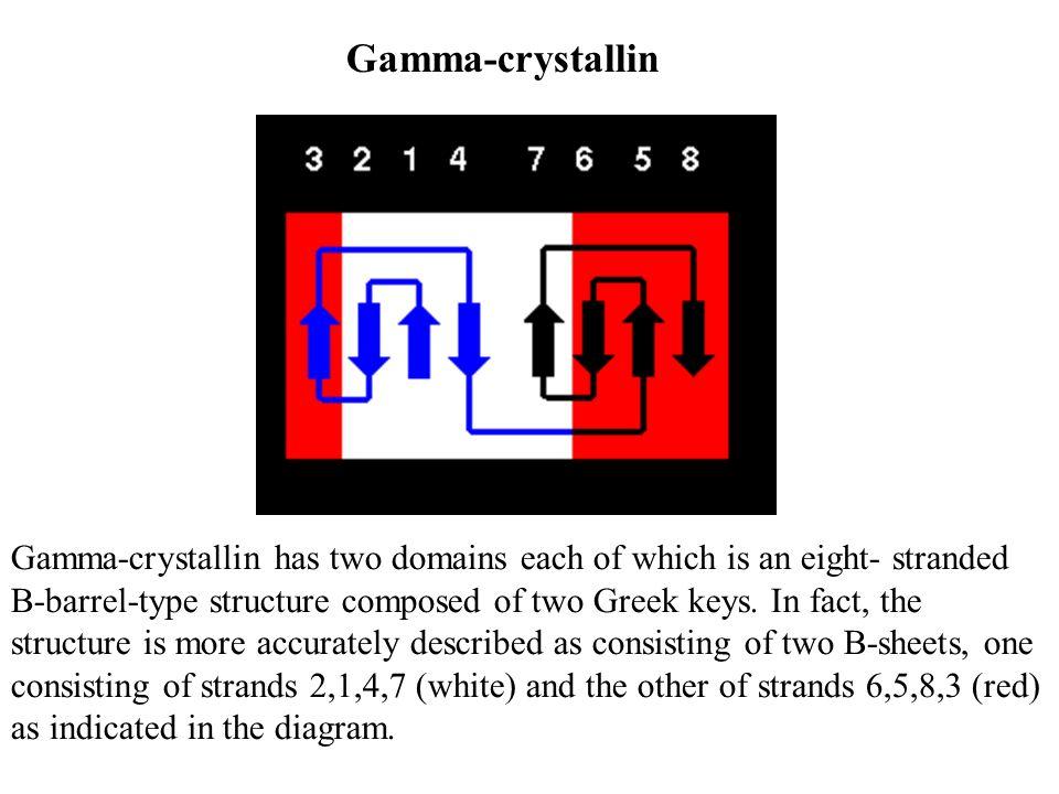Gamma-crystallin