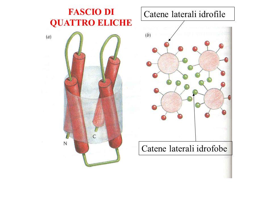 FASCIO DI QUATTRO ELICHE