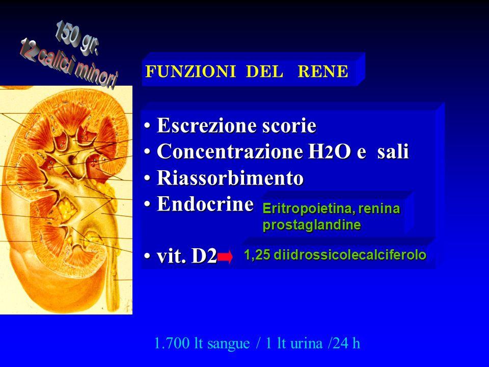 Concentrazione H2O e sali Riassorbimento Endocrine vit. D2
