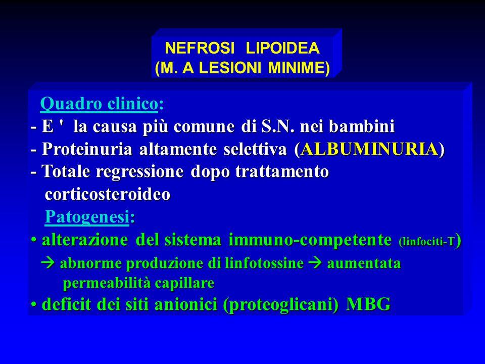NEFROSI LIPOIDEA (M. A LESIONI MINIME)