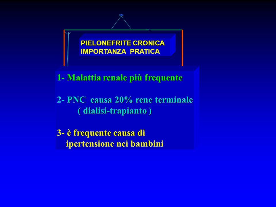 1- Malattia renale più frequente 2- PNC causa 20% rene terminale