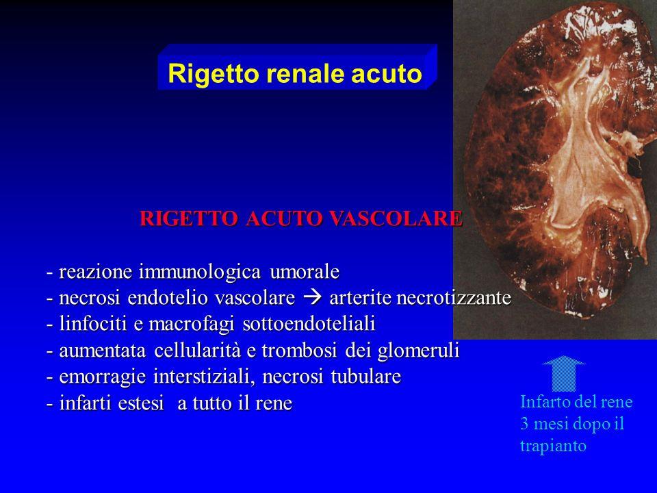 RIGETTO ACUTO VASCOLARE - reazione immunologica umorale