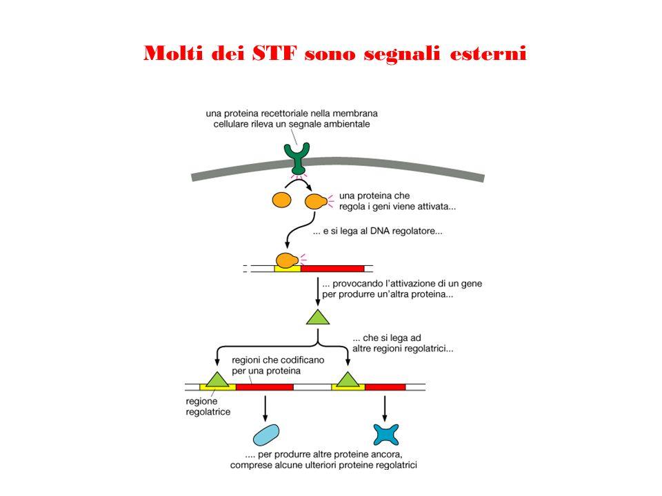 Molti dei STF sono segnali esterni