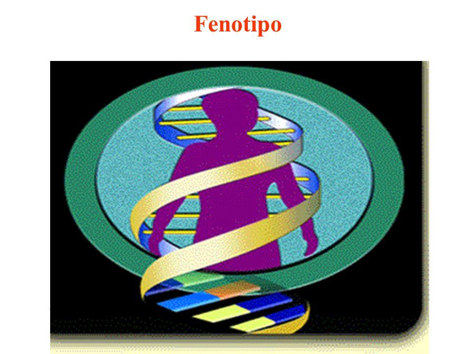 Fenotipo Proteine costitutive Proteine adattative