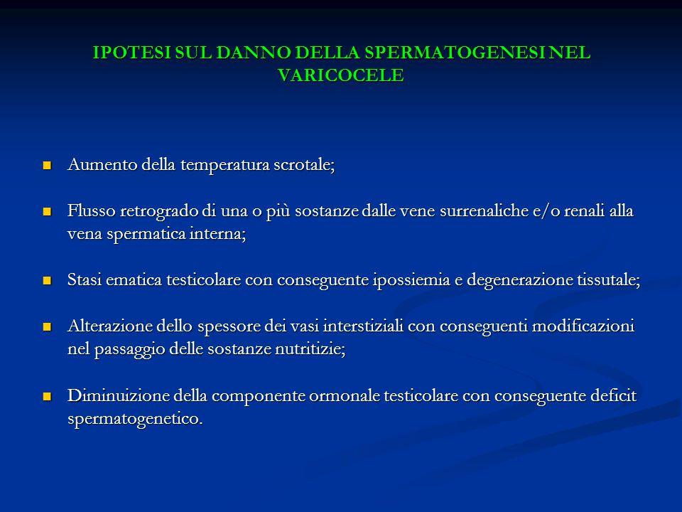 IPOTESI SUL DANNO DELLA SPERMATOGENESI NEL VARICOCELE