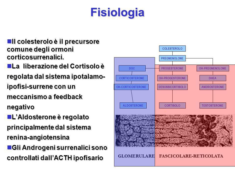 GLOMERULARE FASCICOLARE-RETICOLATA