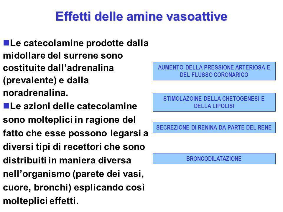 Effetti delle amine vasoattive