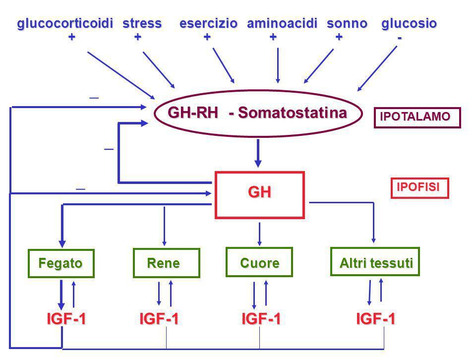 _ _ GH-RH - Somatostatina _ _ GH IGF-1 IGF-1 IGF-1 IGF-1