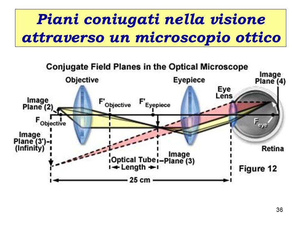 Piani coniugati nella visione attraverso un microscopio ottico