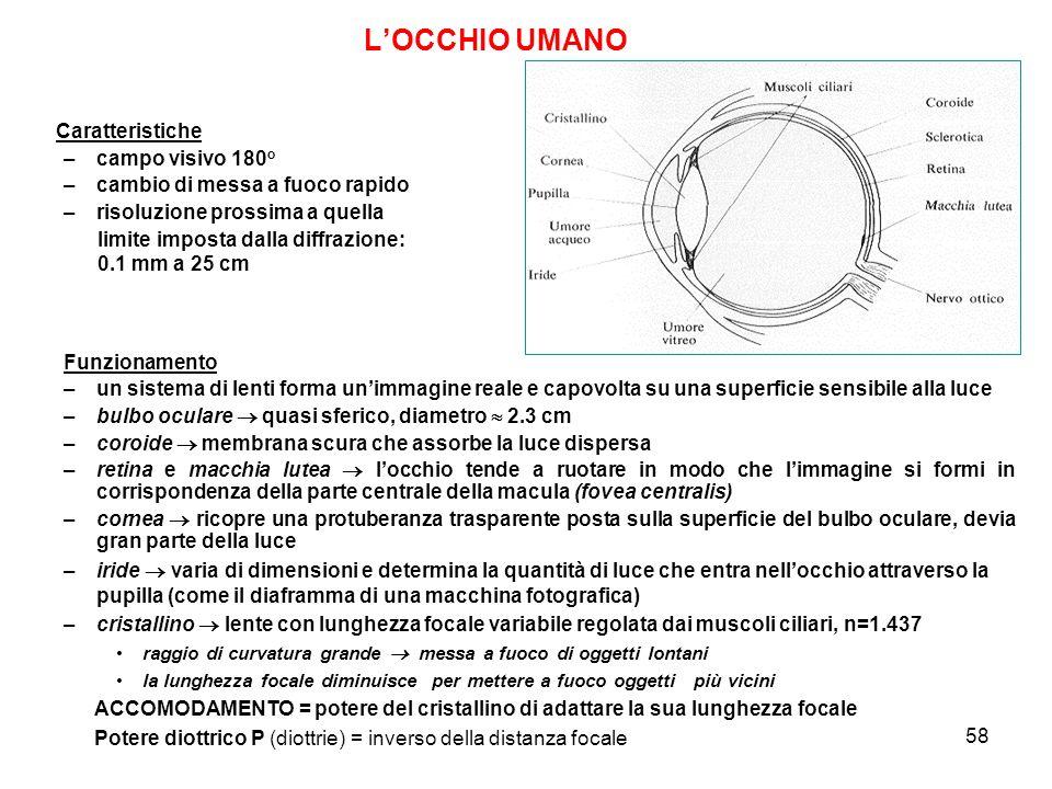 L'OCCHIO UMANO Caratteristiche campo visivo 180o
