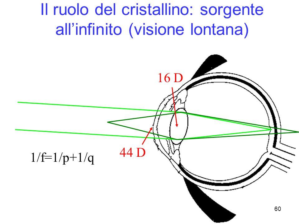 Il ruolo del cristallino: sorgente all'infinito (visione lontana)