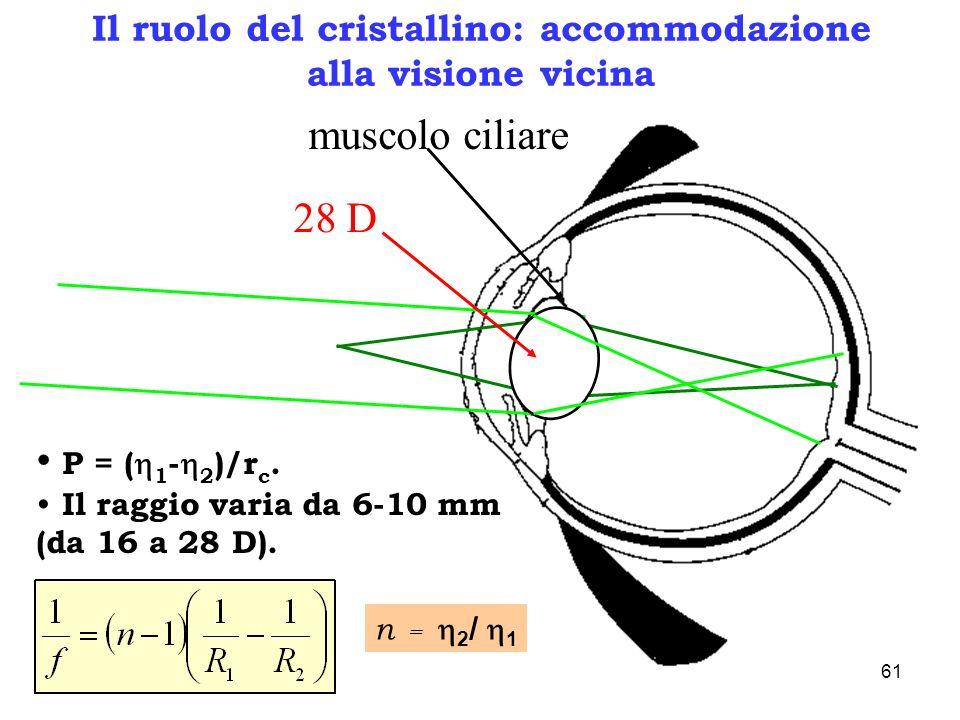 Il ruolo del cristallino: accommodazione alla visione vicina