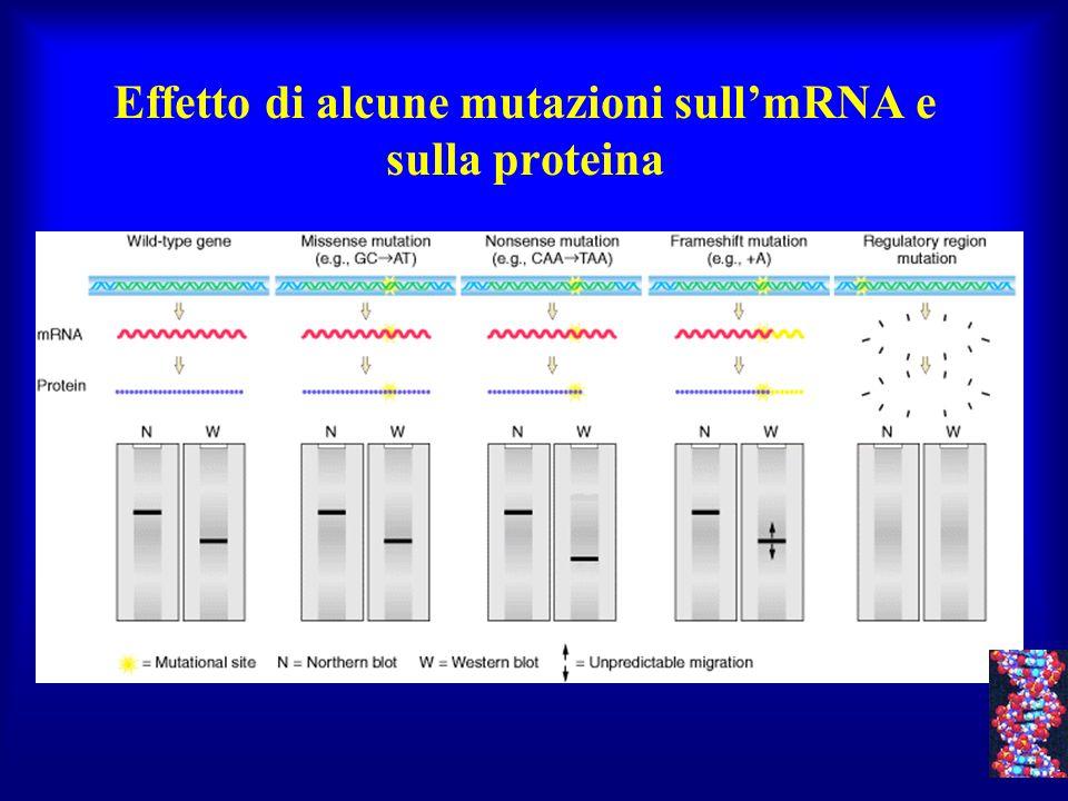 Effetto di alcune mutazioni sull'mRNA e sulla proteina