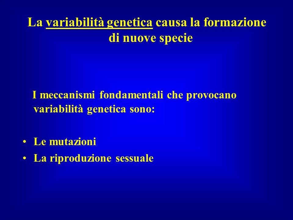 La variabilità genetica causa la formazione di nuove specie