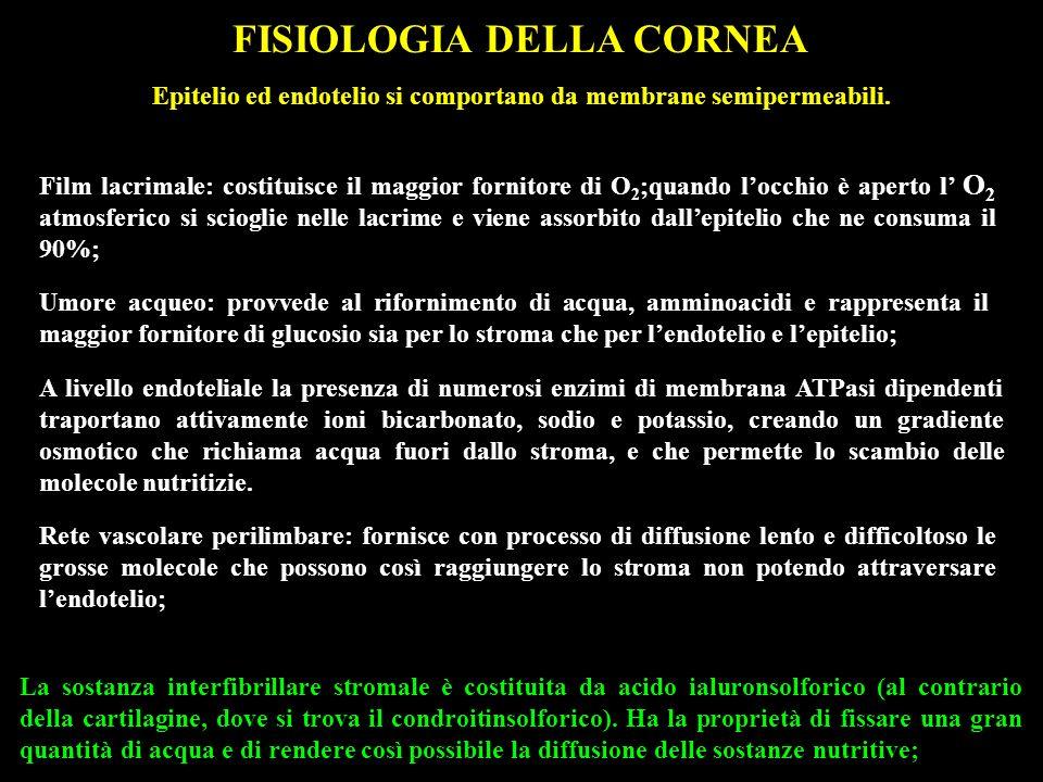 FISIOLOGIA DELLA CORNEA