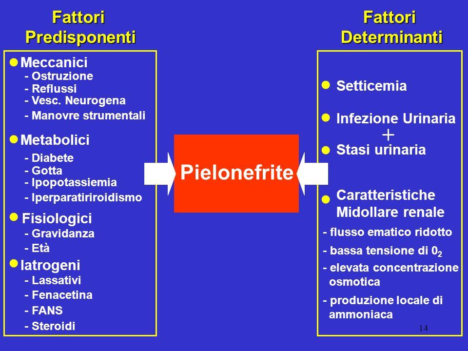 • • • • • • • • Pielonefrite Fattori Predisponenti Fattori