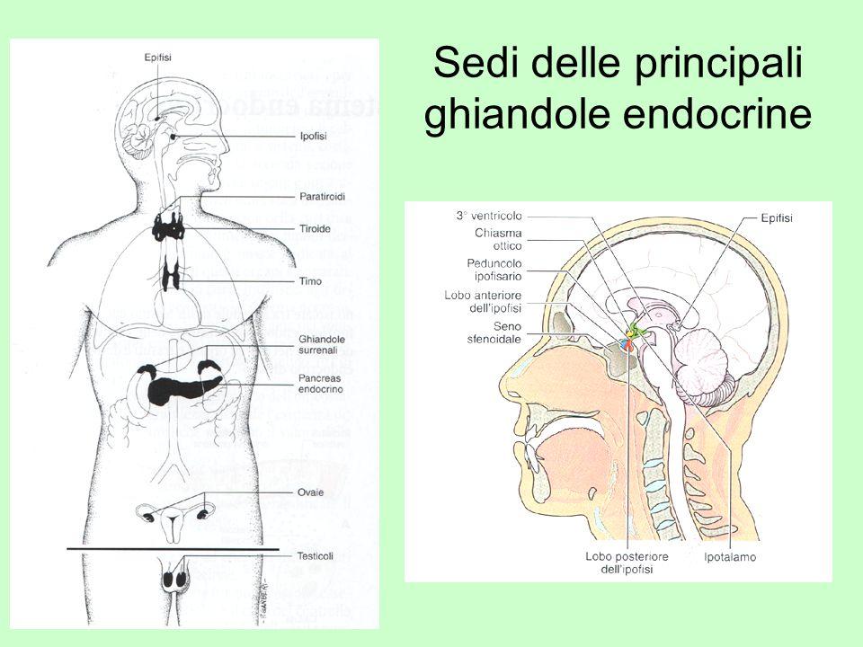 Sedi delle principali ghiandole endocrine