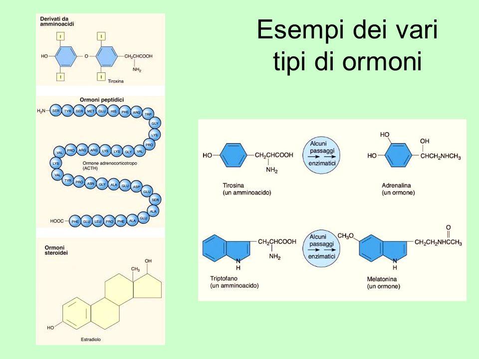 Esempi dei vari tipi di ormoni