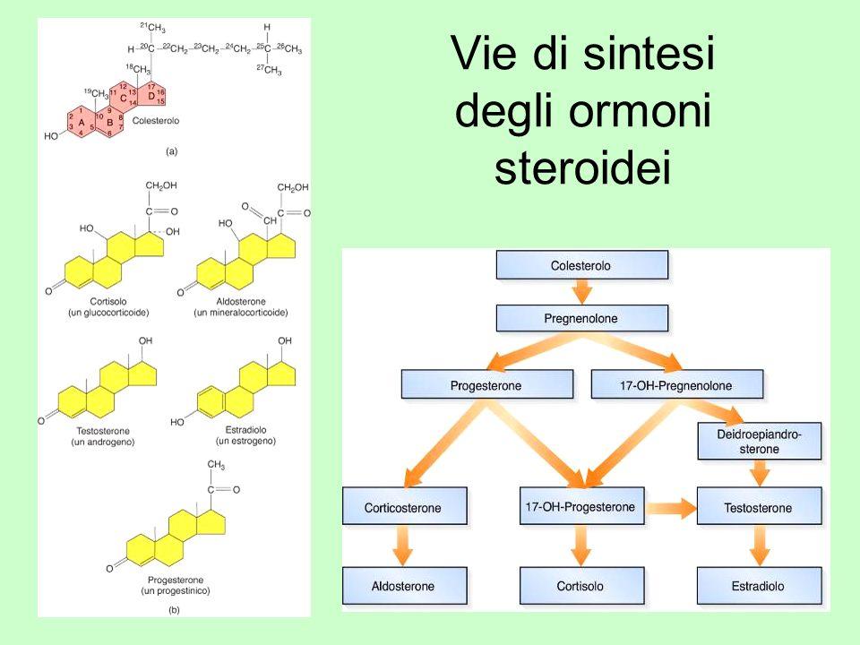 Vie di sintesi degli ormoni steroidei