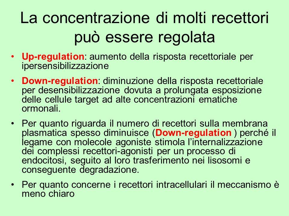 La concentrazione di molti recettori può essere regolata