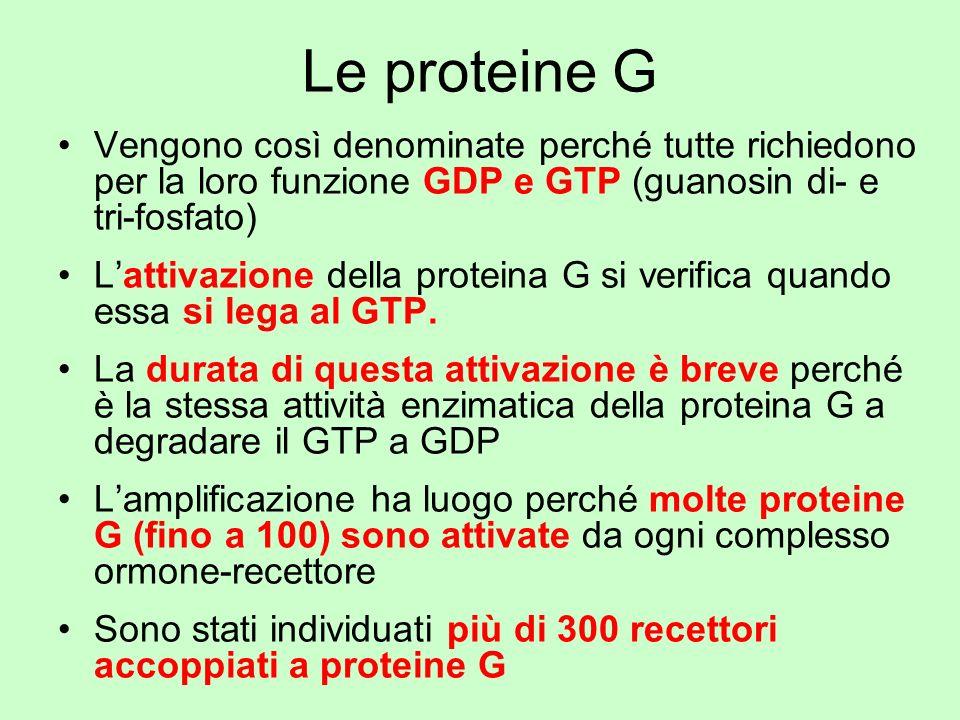 Le proteine G Vengono così denominate perché tutte richiedono per la loro funzione GDP e GTP (guanosin di- e tri-fosfato)
