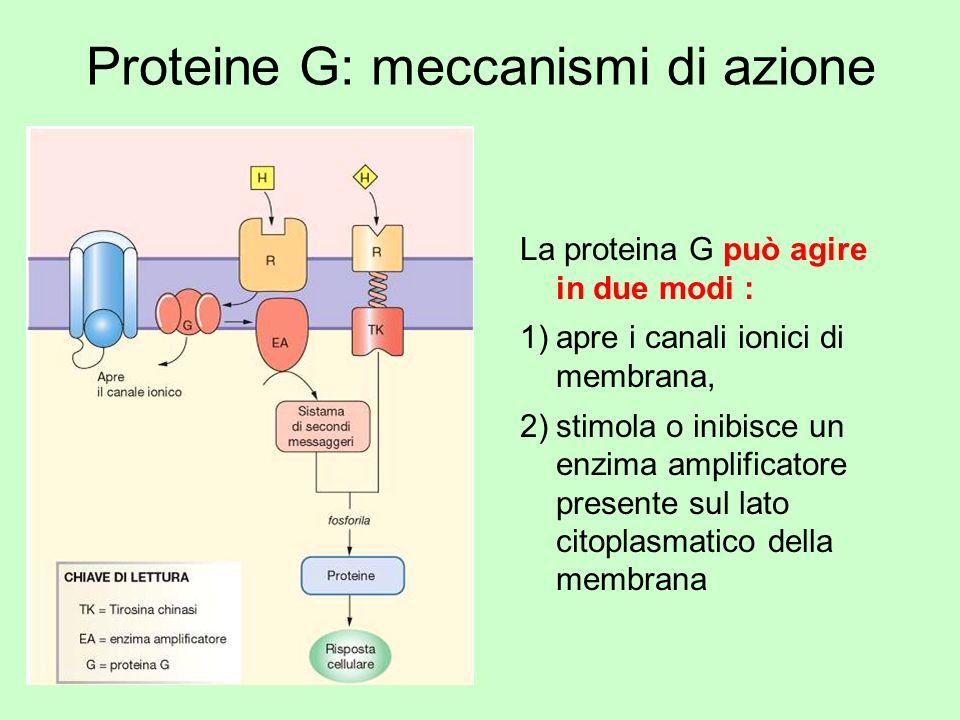 Proteine G: meccanismi di azione