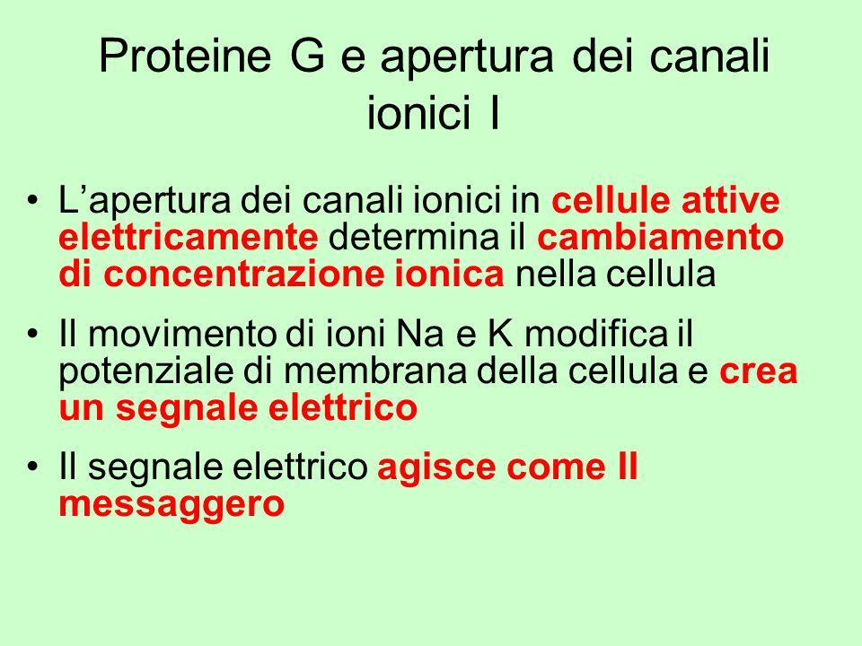 Proteine G e apertura dei canali ionici I