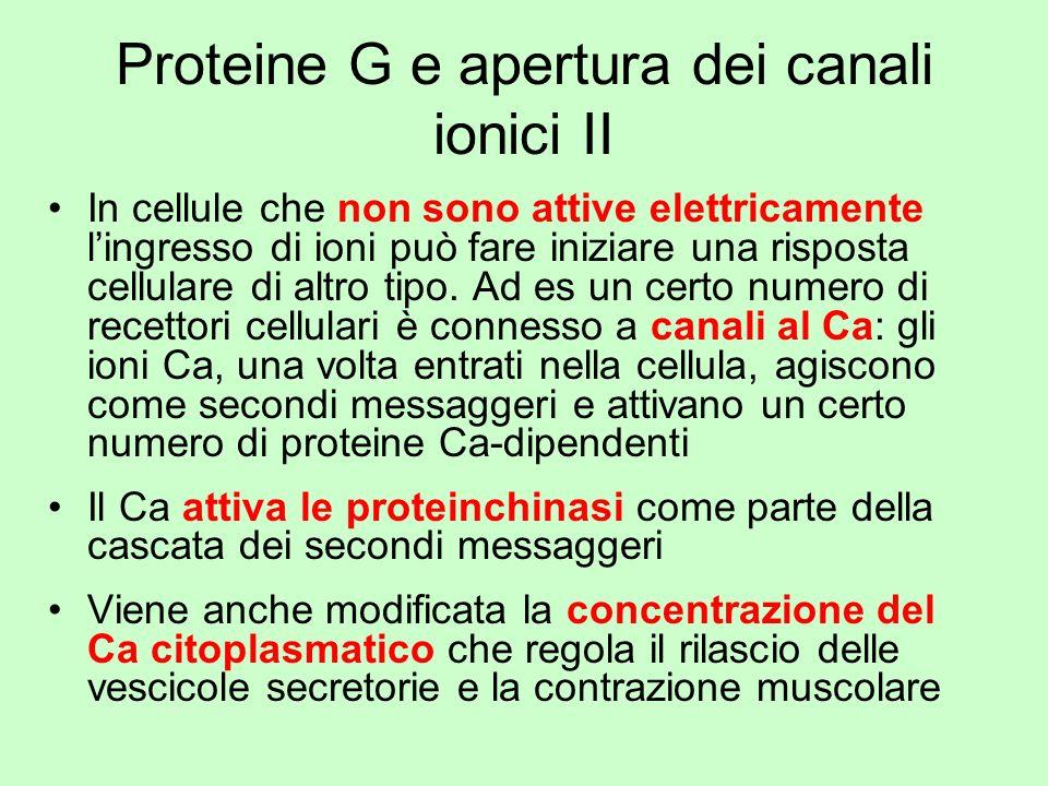 Proteine G e apertura dei canali ionici II