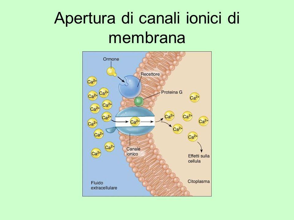 Apertura di canali ionici di membrana