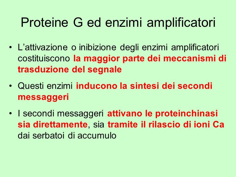Proteine G ed enzimi amplificatori