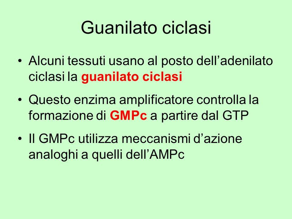 Guanilato ciclasi Alcuni tessuti usano al posto dell'adenilato ciclasi la guanilato ciclasi.