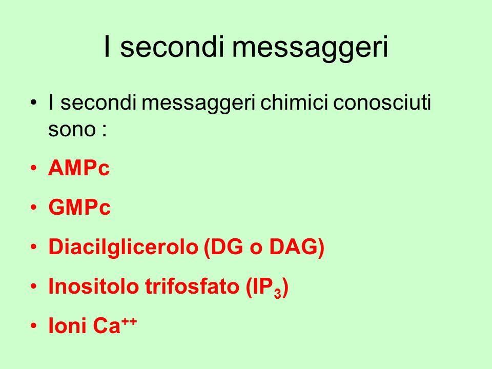 I secondi messaggeri I secondi messaggeri chimici conosciuti sono :