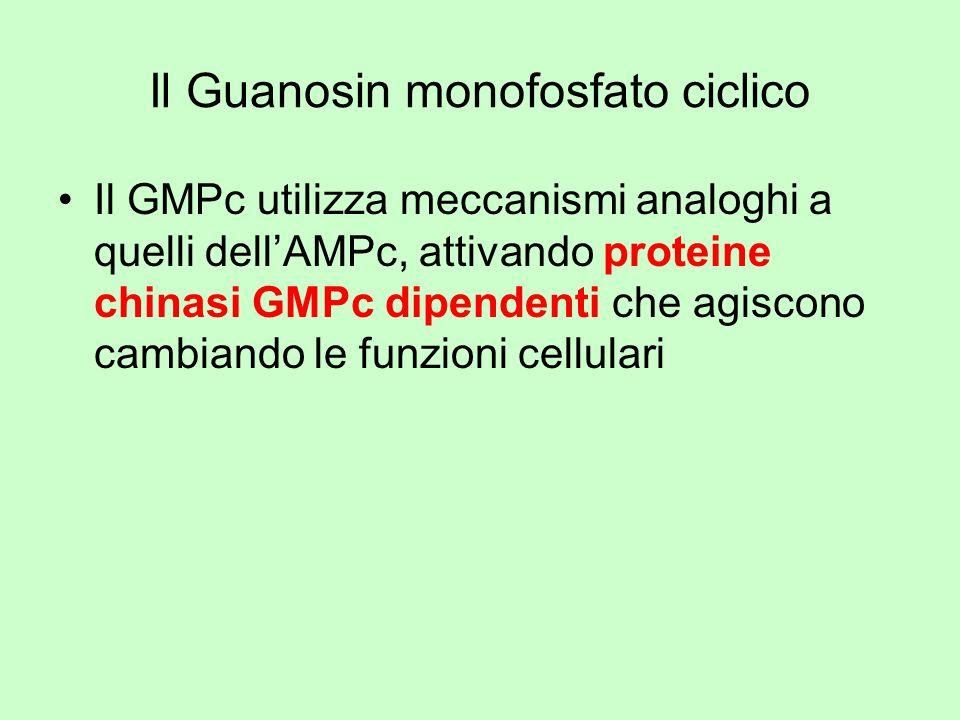 Il Guanosin monofosfato ciclico