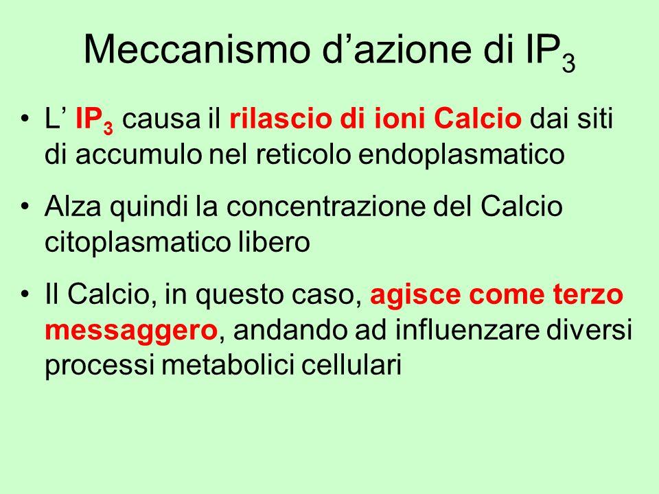Meccanismo d'azione di IP3