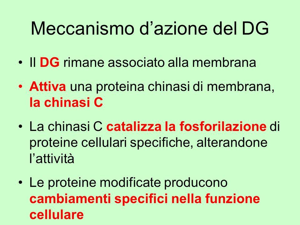 Meccanismo d'azione del DG