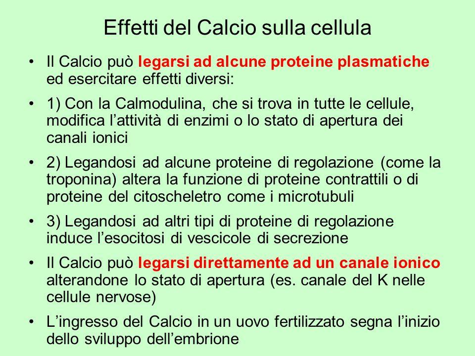 Effetti del Calcio sulla cellula