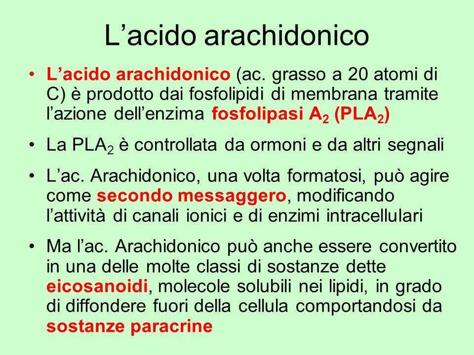 L'acido arachidonico