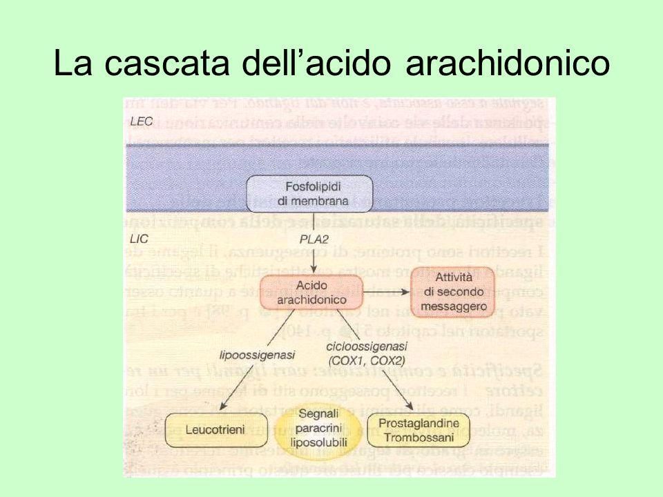 La cascata dell'acido arachidonico