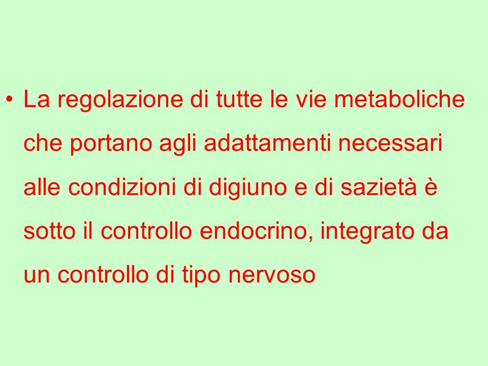 La regolazione di tutte le vie metaboliche che portano agli adattamenti necessari alle condizioni di digiuno e di sazietà è sotto il controllo endocrino, integrato da un controllo di tipo nervoso