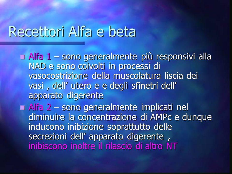 Recettori Alfa e beta