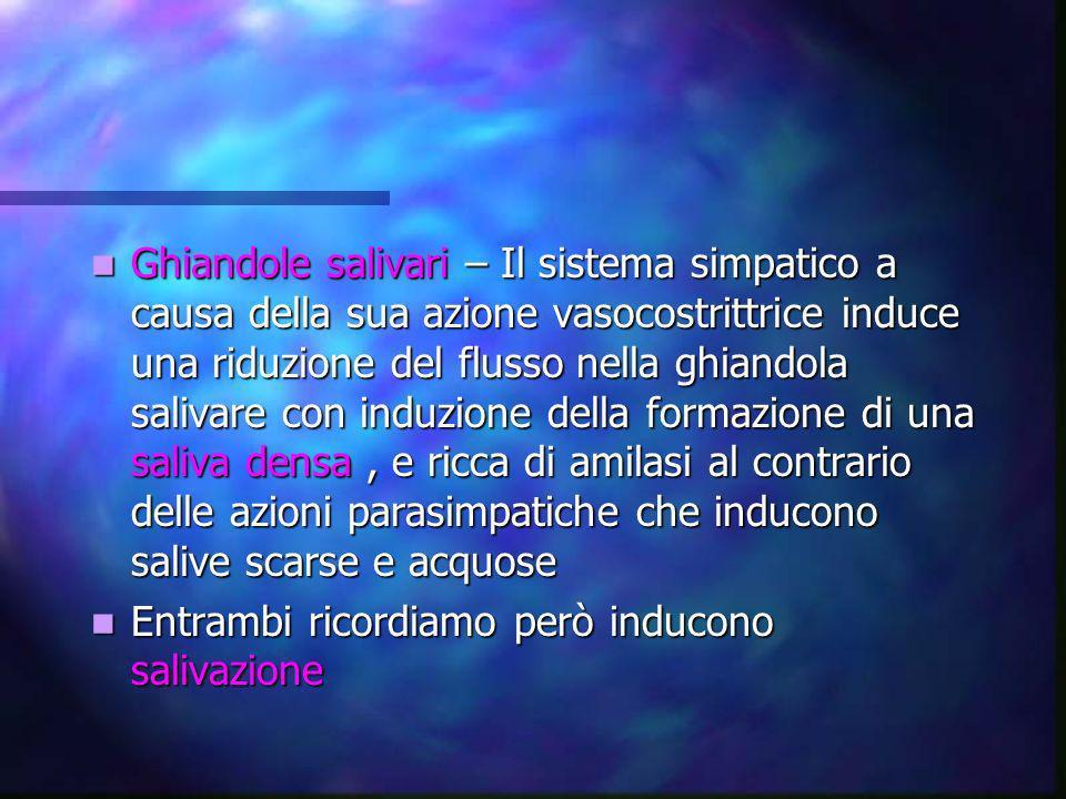 Ghiandole salivari – Il sistema simpatico a causa della sua azione vasocostrittrice induce una riduzione del flusso nella ghiandola salivare con induzione della formazione di una saliva densa , e ricca di amilasi al contrario delle azioni parasimpatiche che inducono salive scarse e acquose