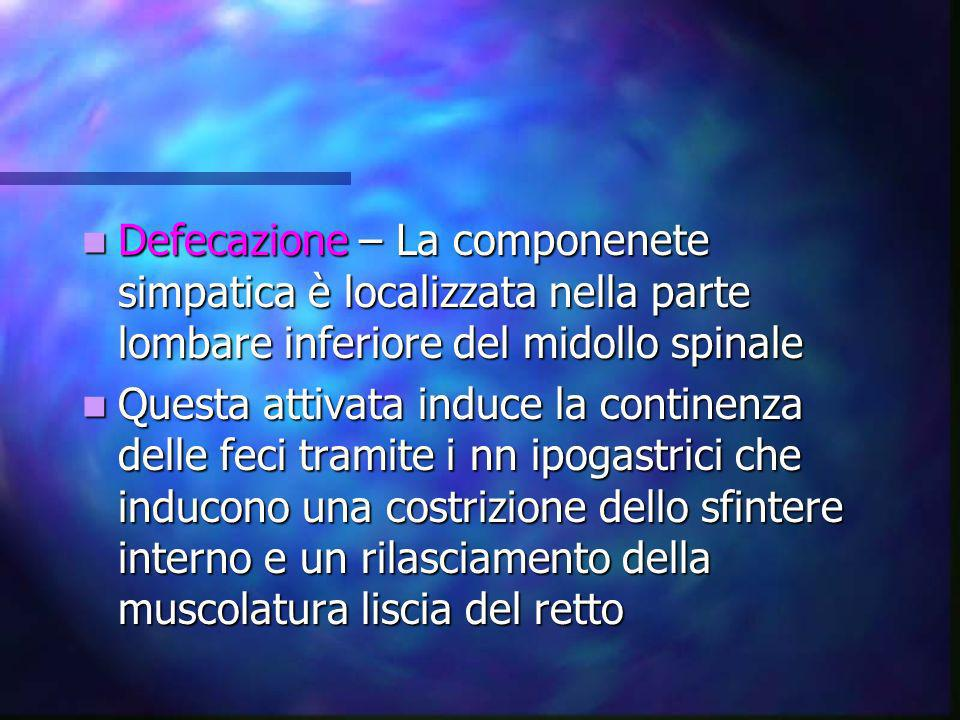 Defecazione – La componenete simpatica è localizzata nella parte lombare inferiore del midollo spinale