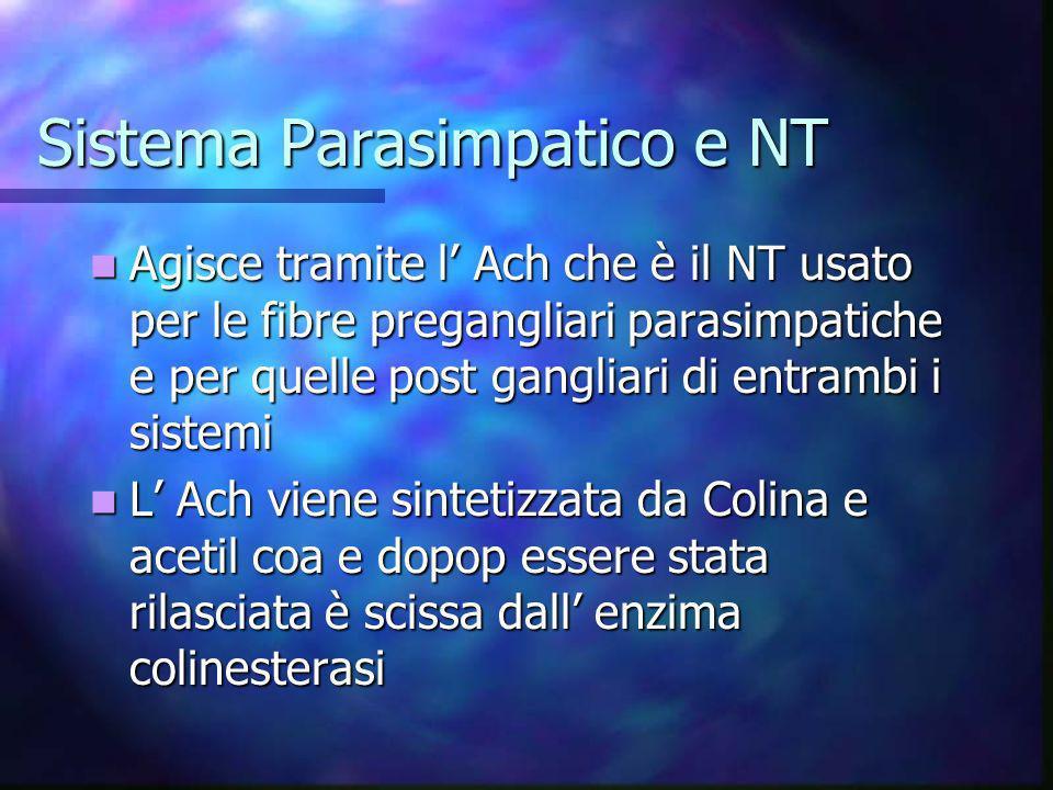 Sistema Parasimpatico e NT