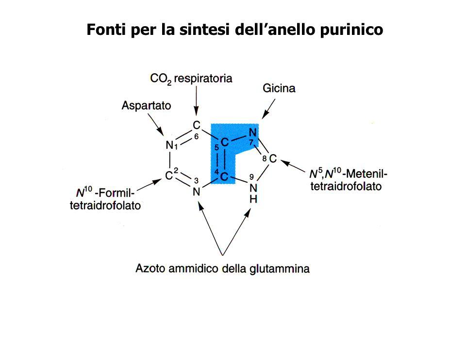 Fonti per la sintesi dell'anello purinico