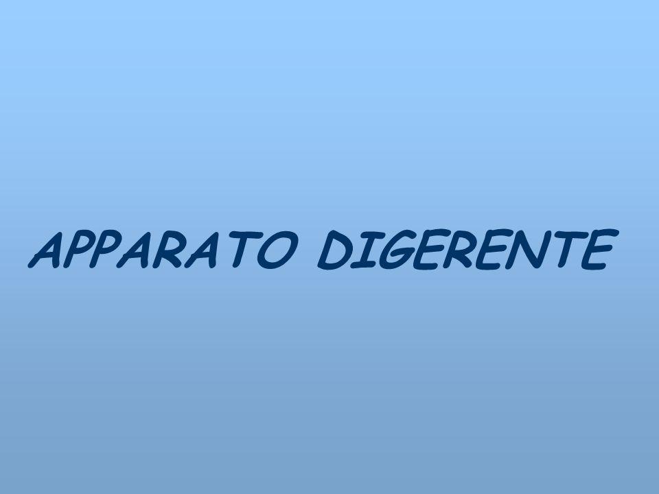 APPARATO DIGERENTE