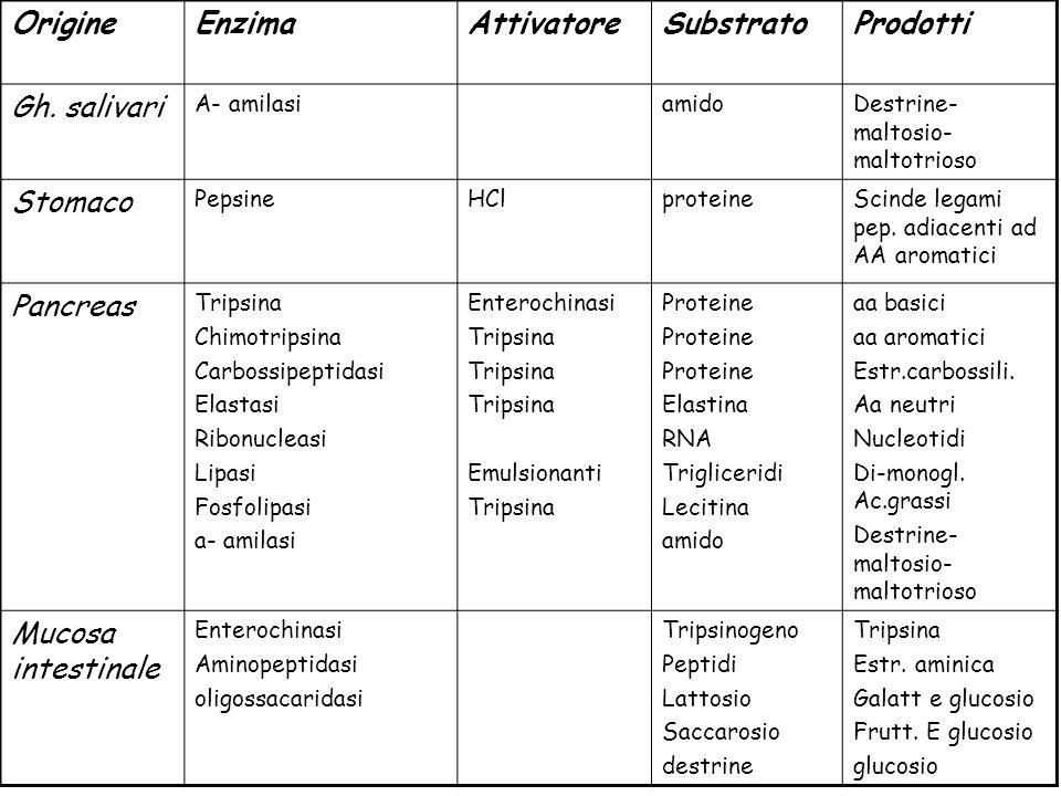 Origine Enzima Attivatore Substrato Prodotti Gh. salivari Stomaco