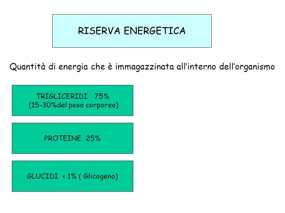 GLUCIDI < 1% ( Glicogeno)