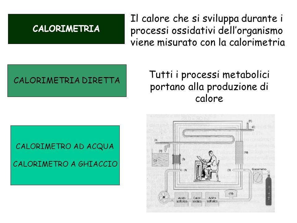Tutti i processi metabolici portano alla produzione di calore